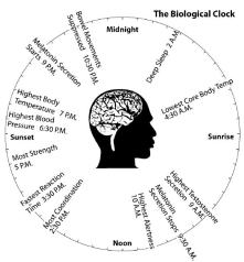 Normal Circadian Rhythm