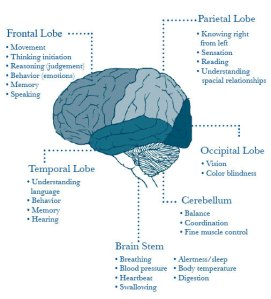 frontal and temporal lobes function FTD early-onset dementia