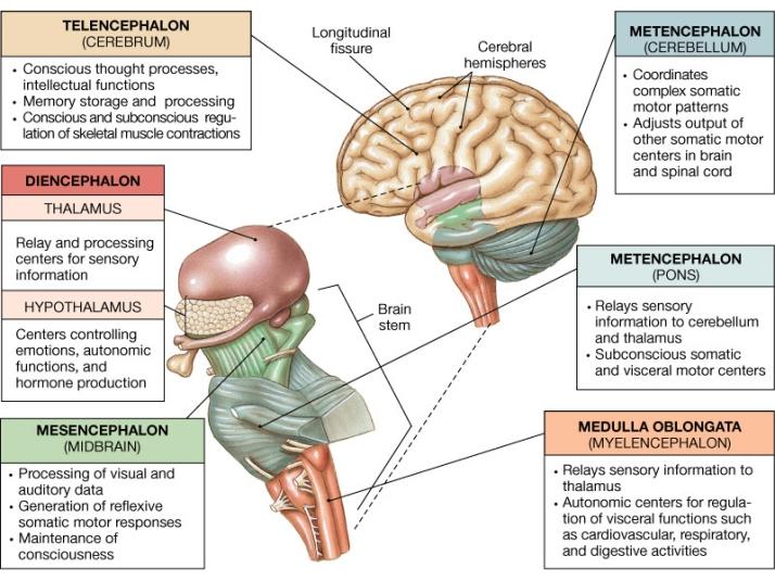 brain-stem-progressive-supranuclear-palsy