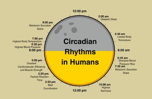 Body S Natural Rhythm