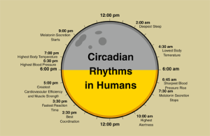 circadian-rhythm-sleep