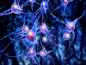 Brain cells (neurons) that don't get used die permanently.