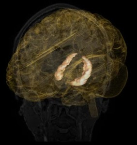 The hippocampus is responsible for memory, learning, and emotions