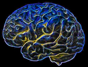 image of brain